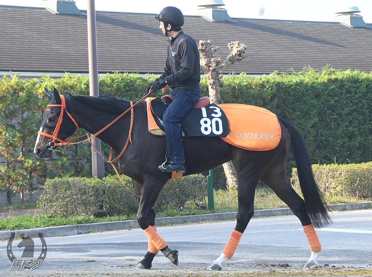 ハニーエンパイアの馬体写真