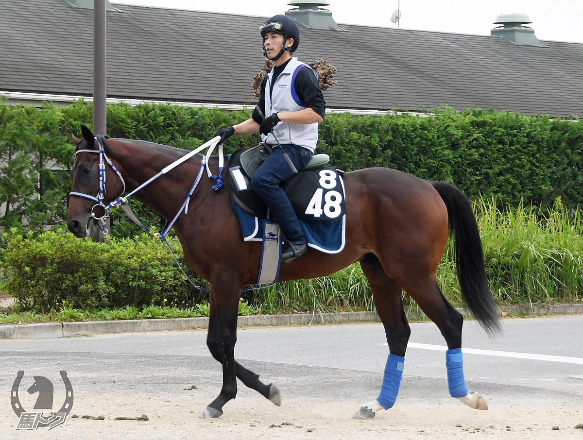 ファイトフォーラヴの馬体写真