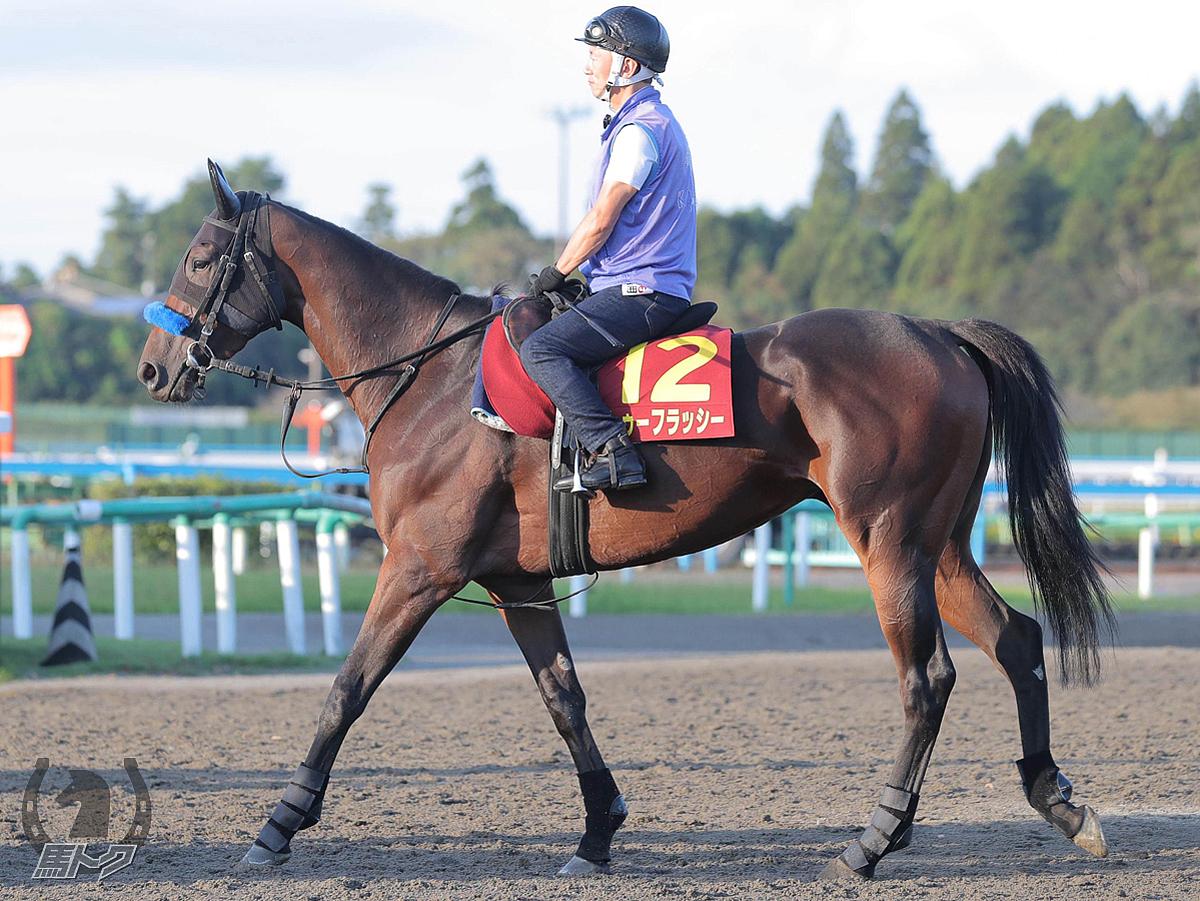 トゥーフラッシーの馬体写真