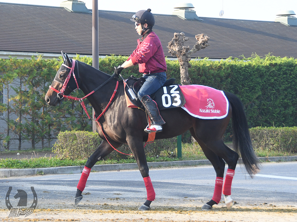 ワンダータビアットの馬体写真