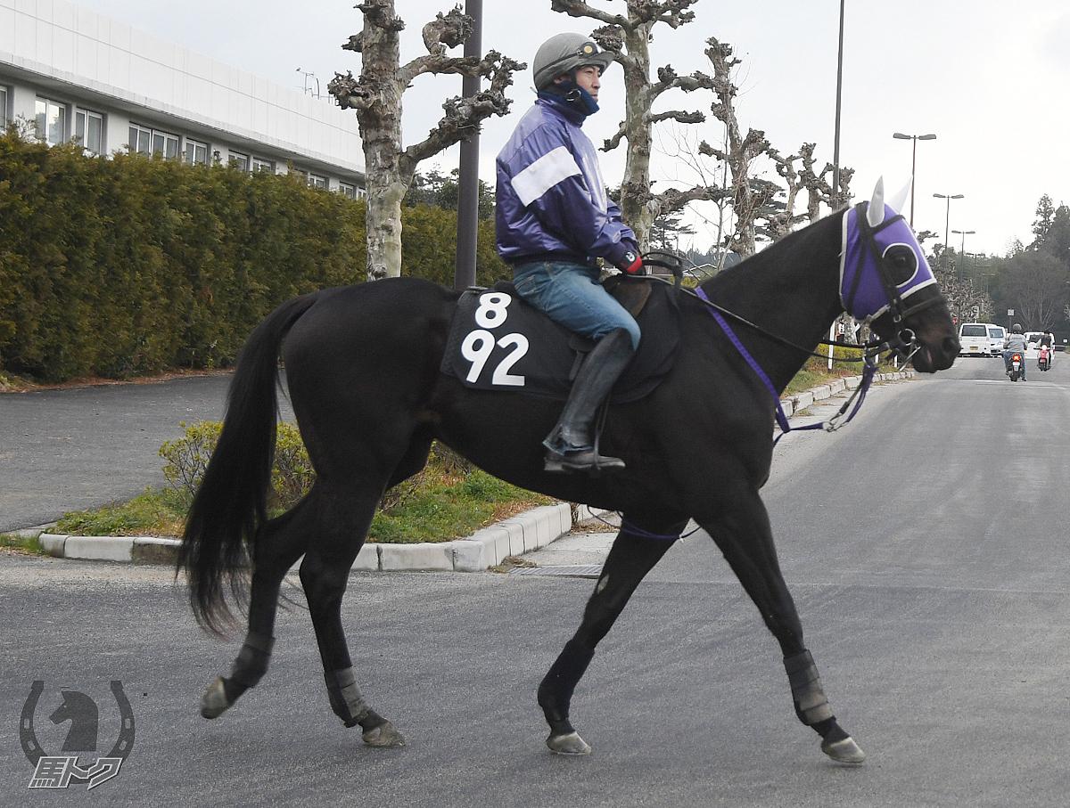 ブルベアカルネの馬体写真