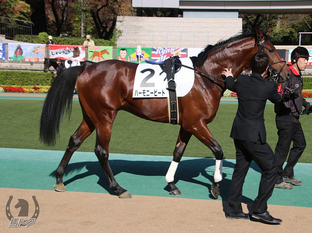ハーモニービートの馬体写真