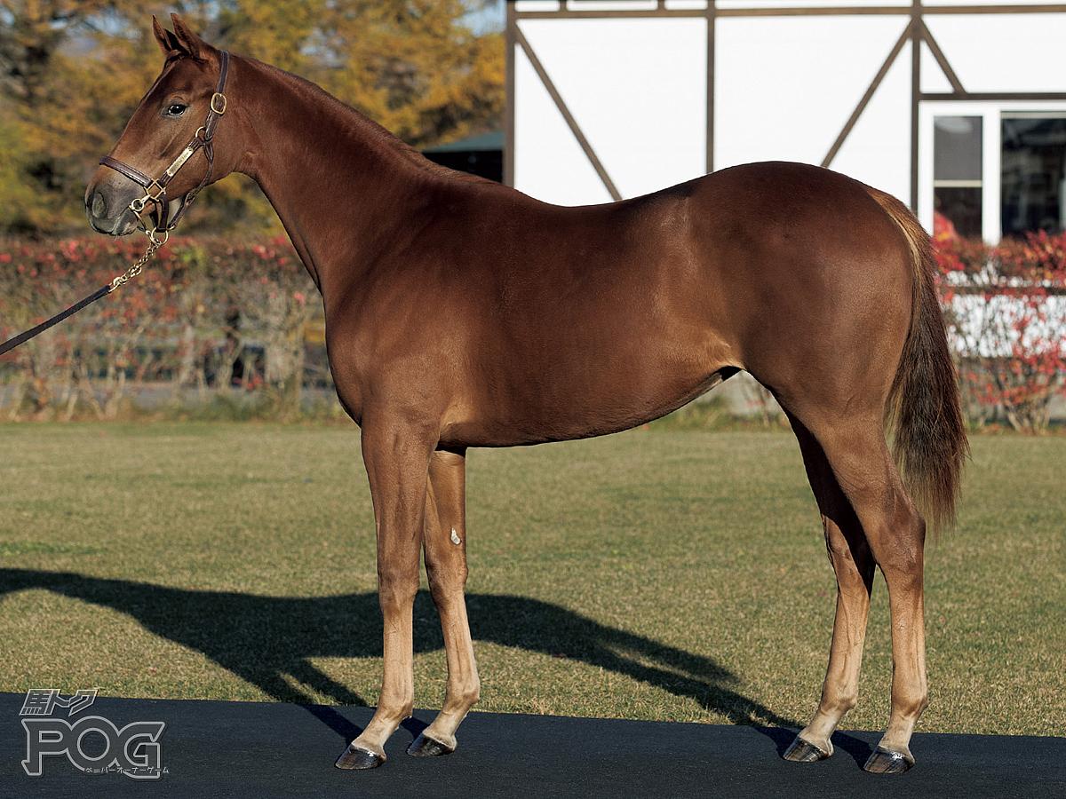 クリッパークラスの馬体写真