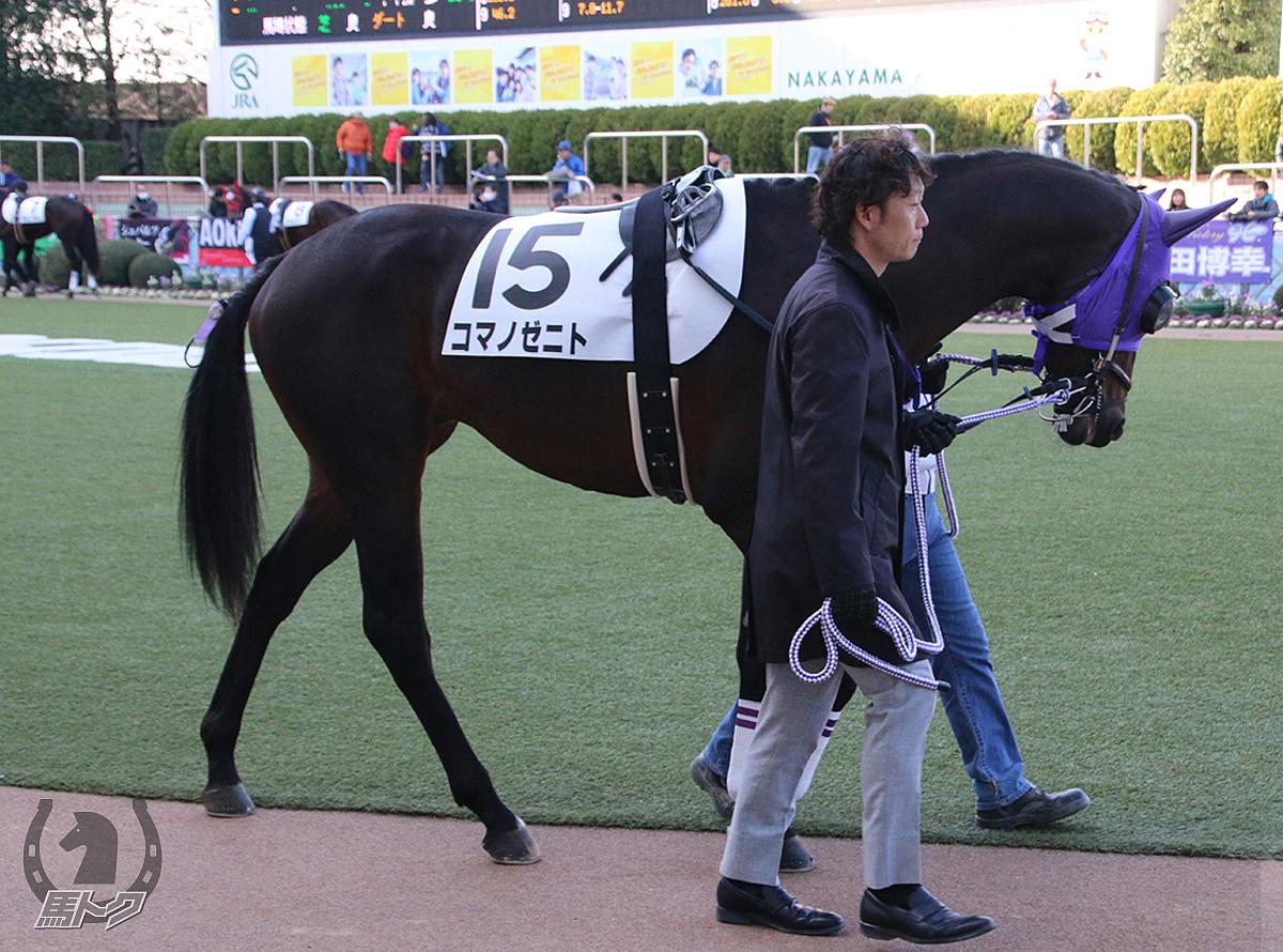 コマノゼニトの馬体写真