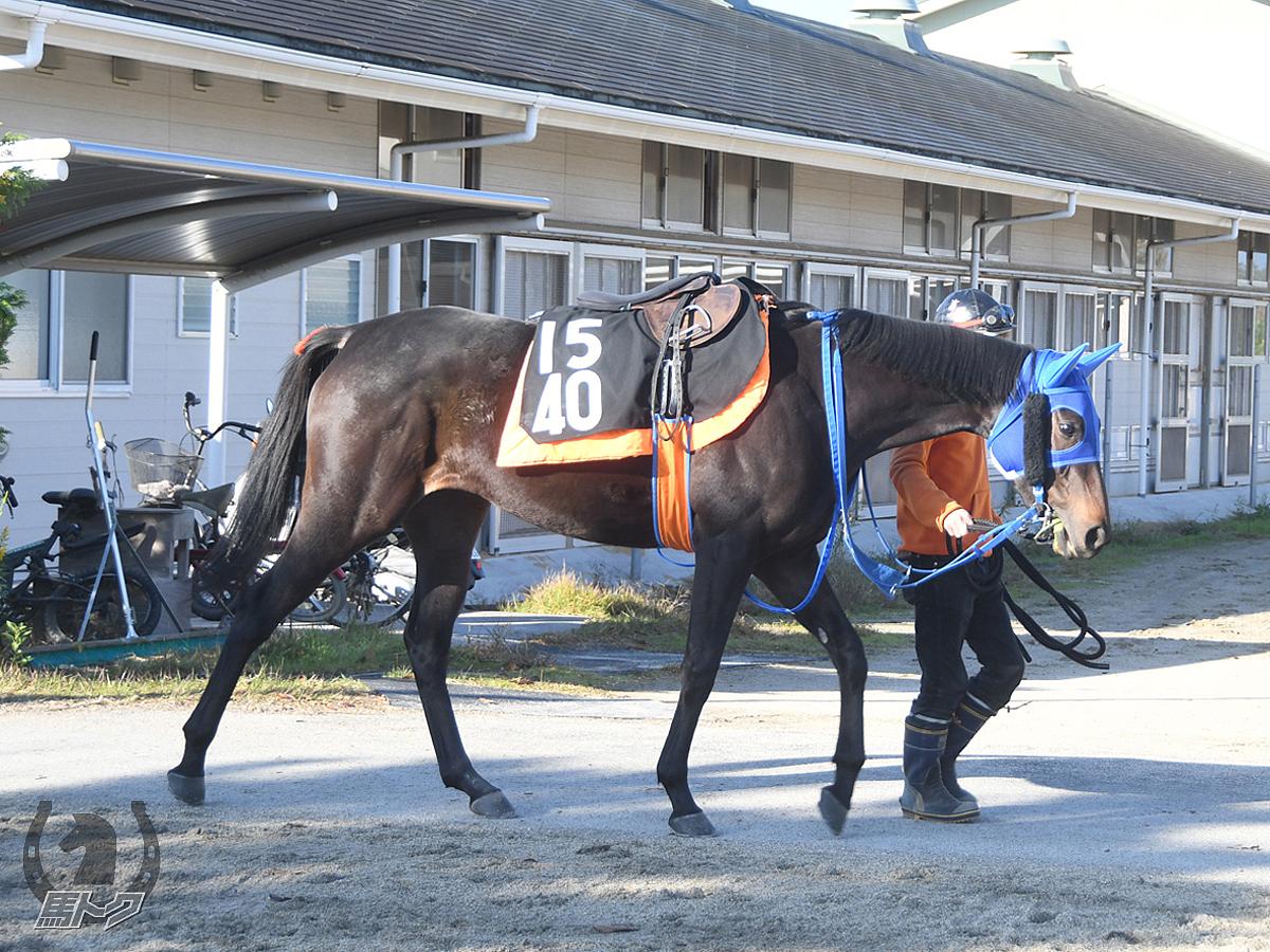 コマノベニーニの馬体写真