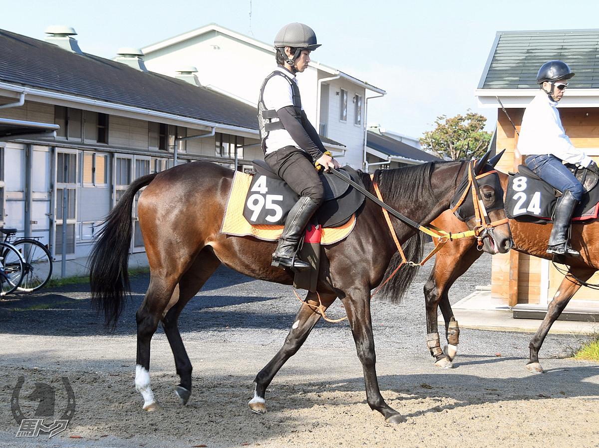 スズカクローカスの馬体写真