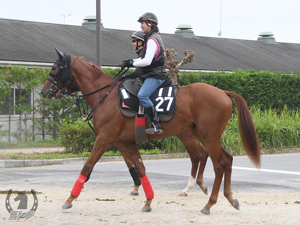 リバーベップスターの馬体写真
