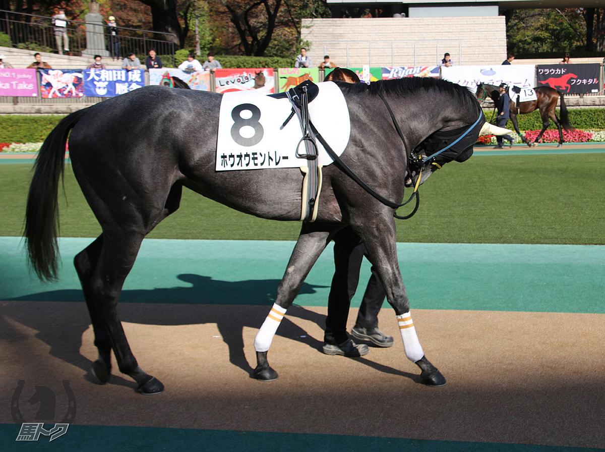 ホウオウモントレーの馬体写真