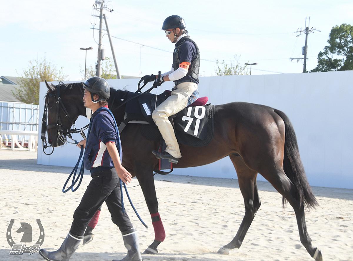 ヤマイチダンディの馬体写真