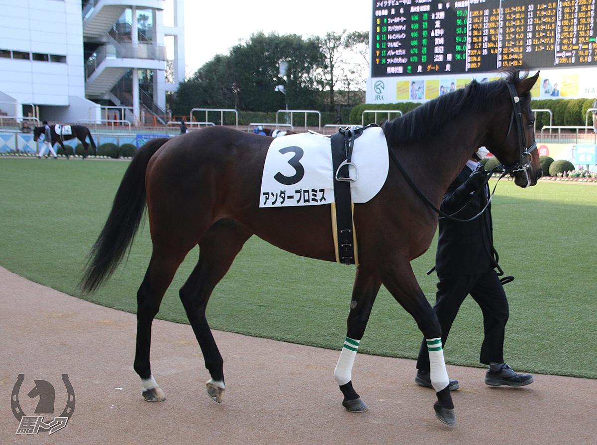 アンダープロミスの馬体写真