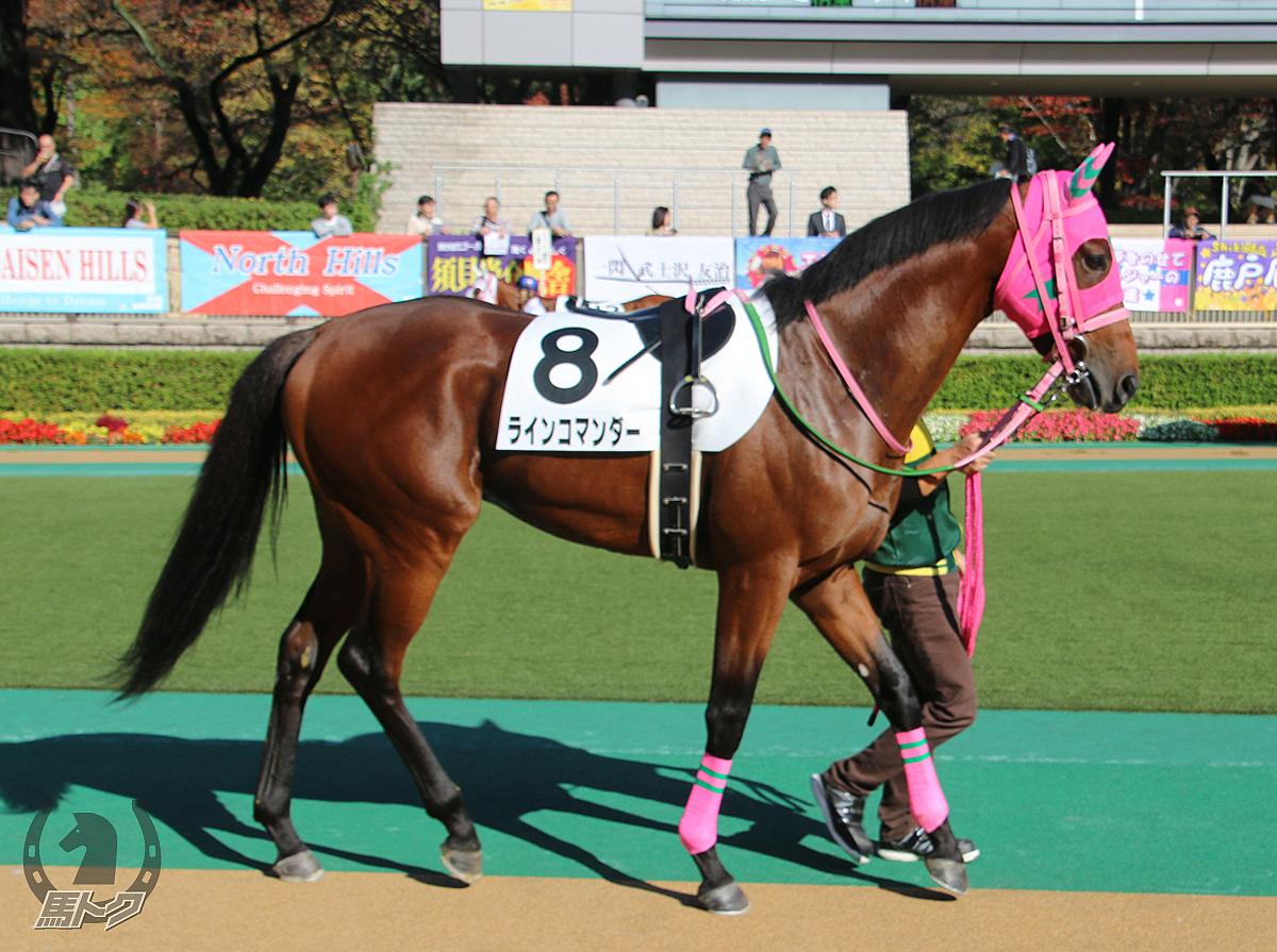 ラインコマンダーの馬体写真