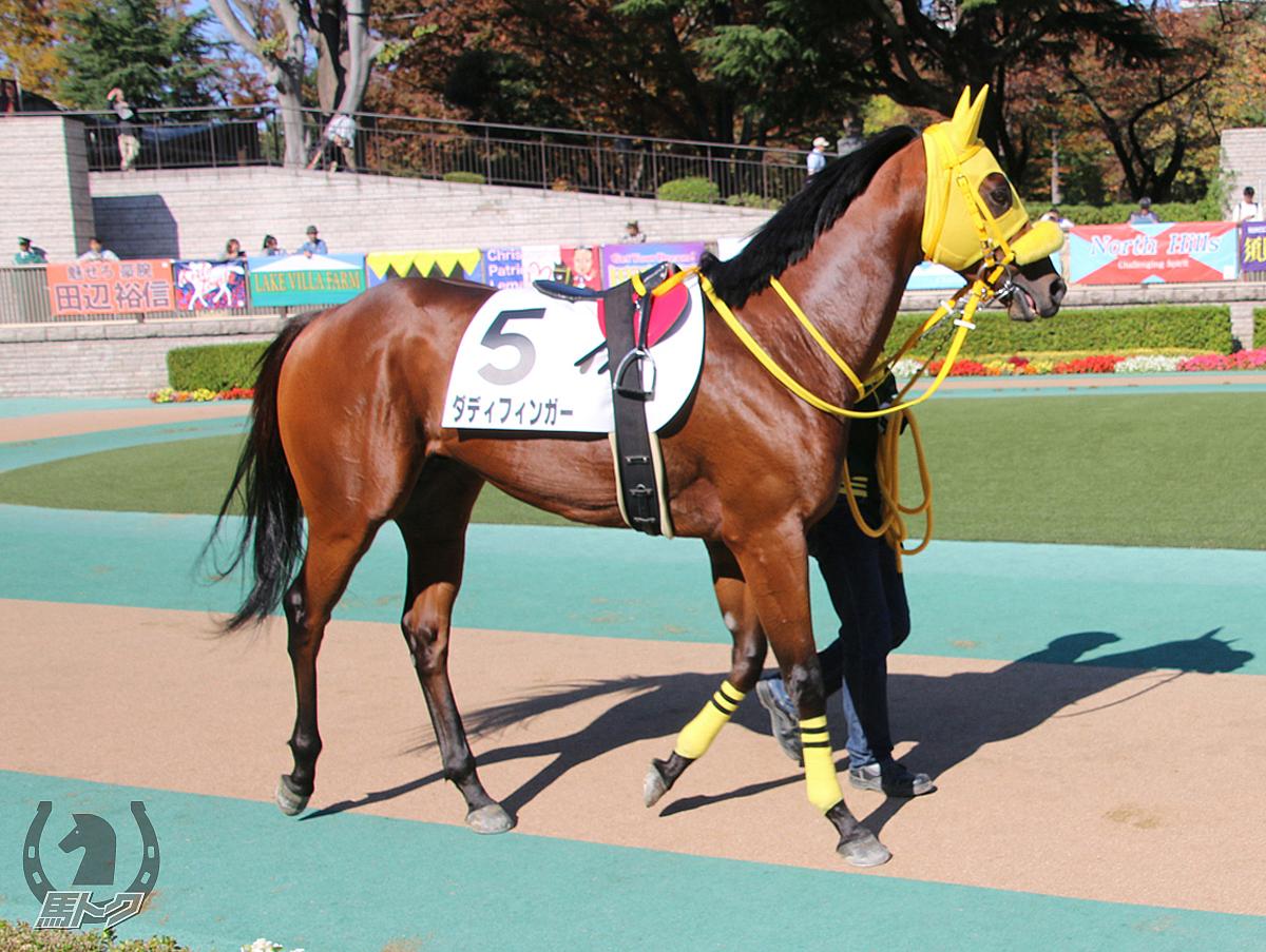 ダディフィンガーの馬体写真