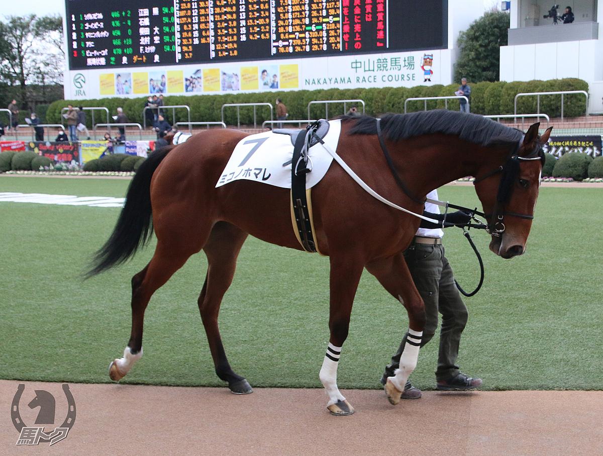 ミコノホマレの馬体写真