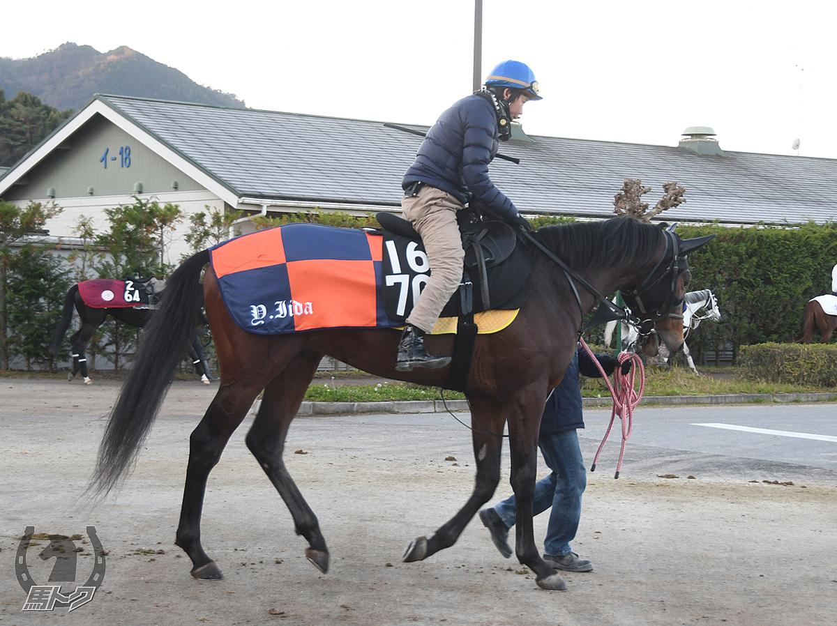 クレスコビヨンドの馬体写真