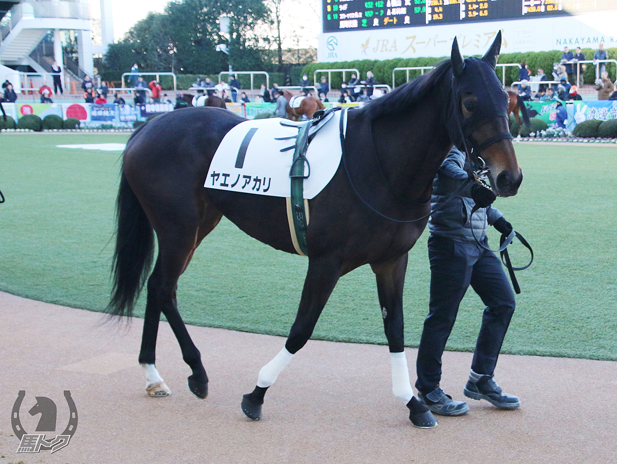 ヤエノアカリの馬体写真