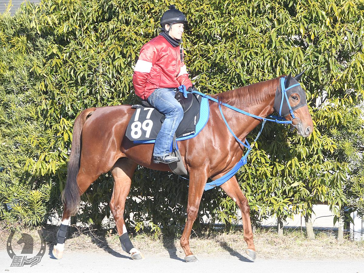 レフレスカンテの馬体写真