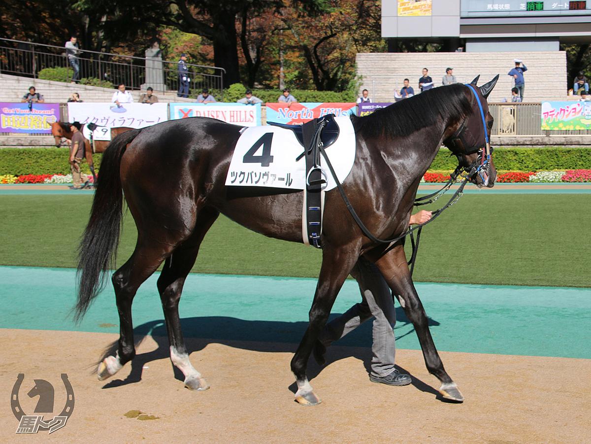 ツクバソヴァールの馬体写真