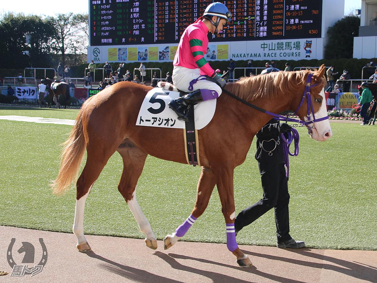 トーアシオンの馬体写真