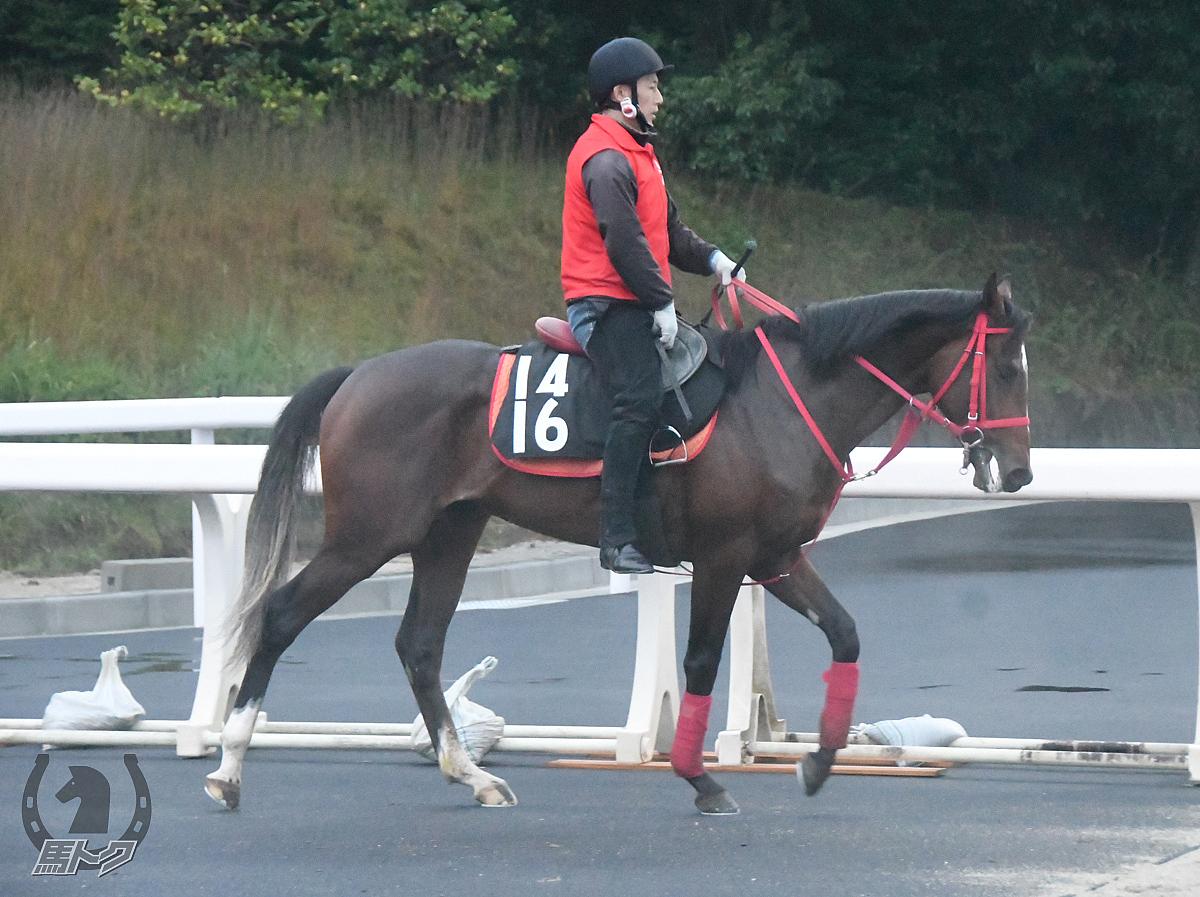 トーアコルレオーネの馬体写真