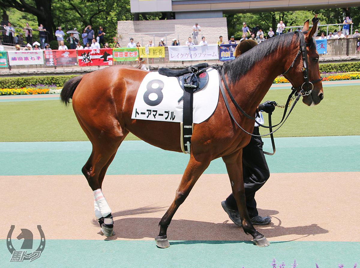 トーアマーブルの馬体写真