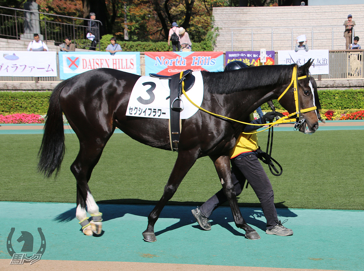 セクシイフラワーの馬体写真