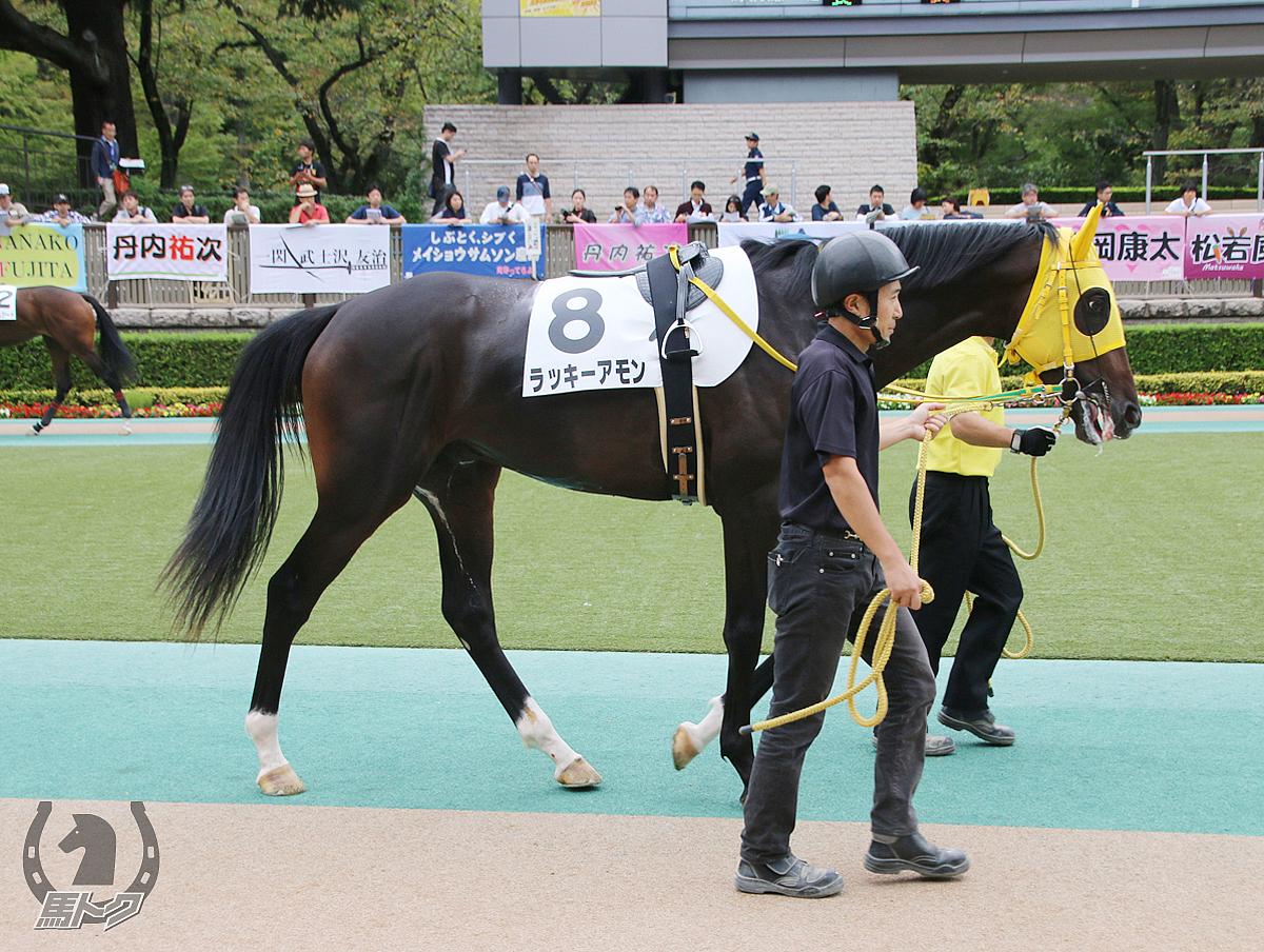 ラッキーアモンの馬体写真