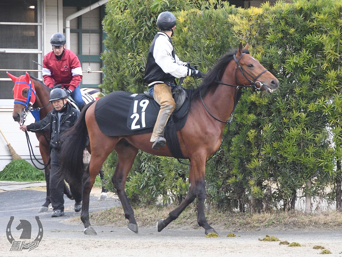 マーシデスペラードの馬体写真