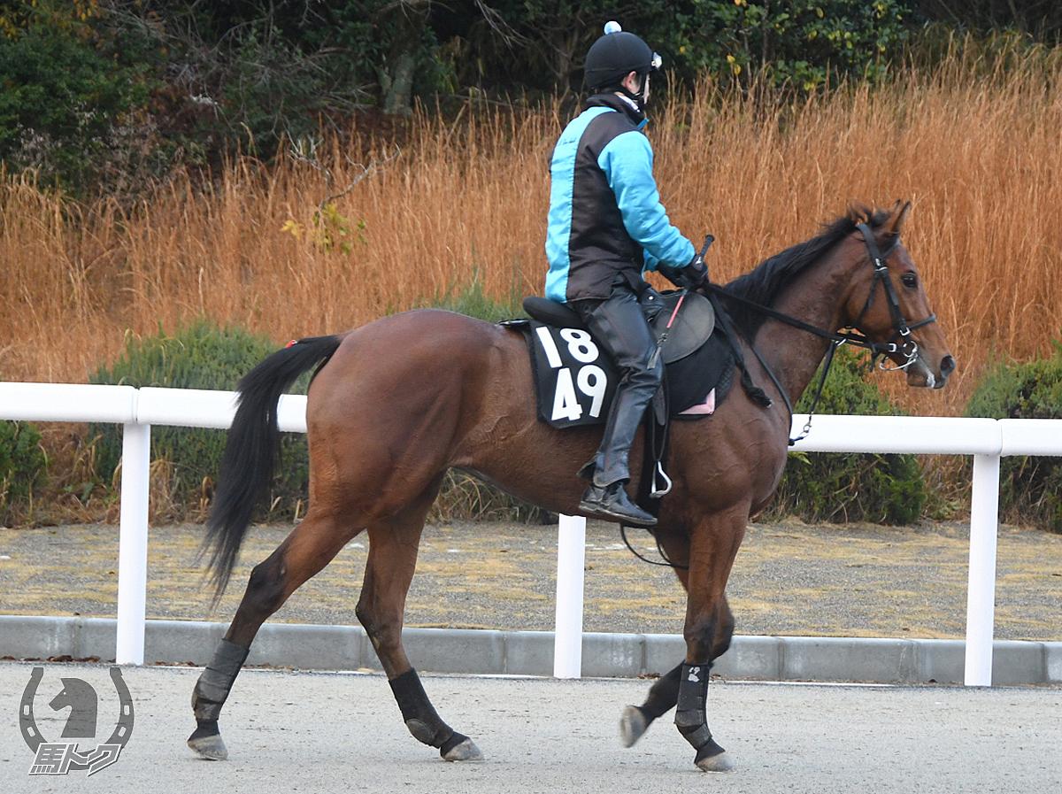 アレスの馬体写真