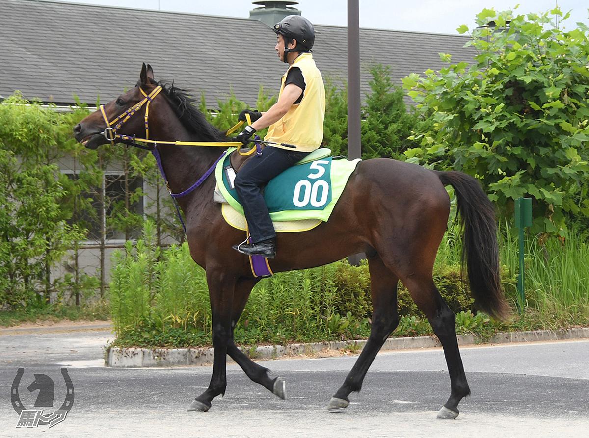 イマジンラヴの馬体写真