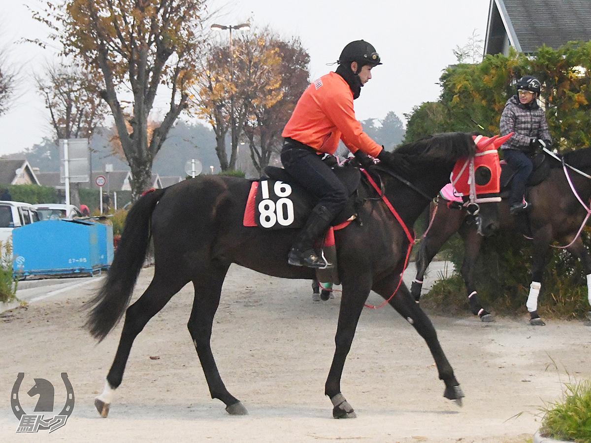 イチザヒーローの馬体写真
