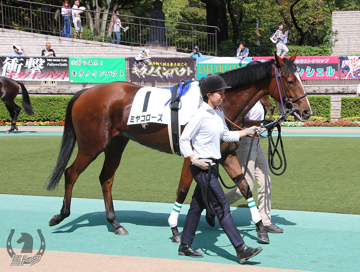 ミヤコローズの馬体写真
