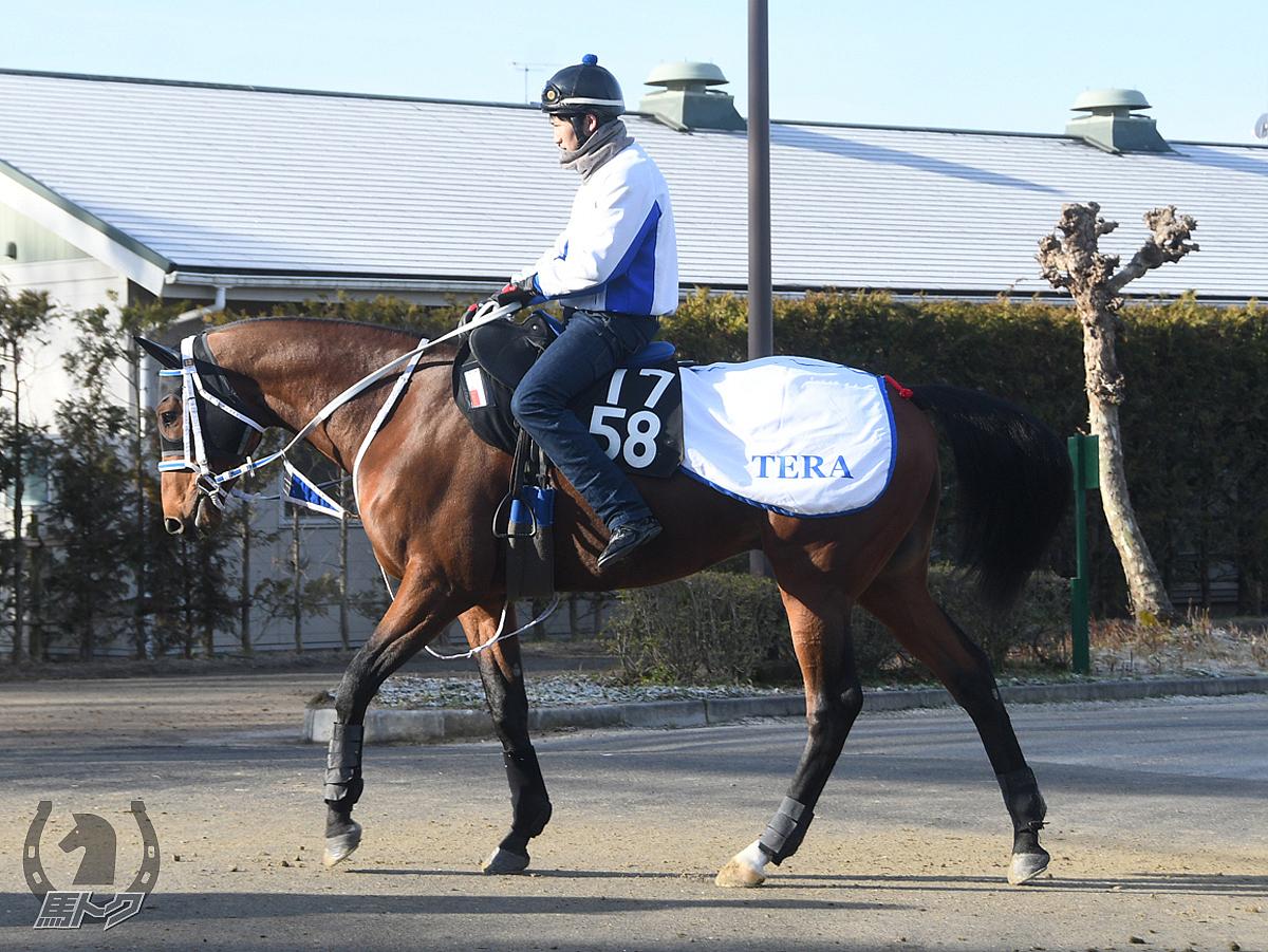 シホノフォルテの馬体写真