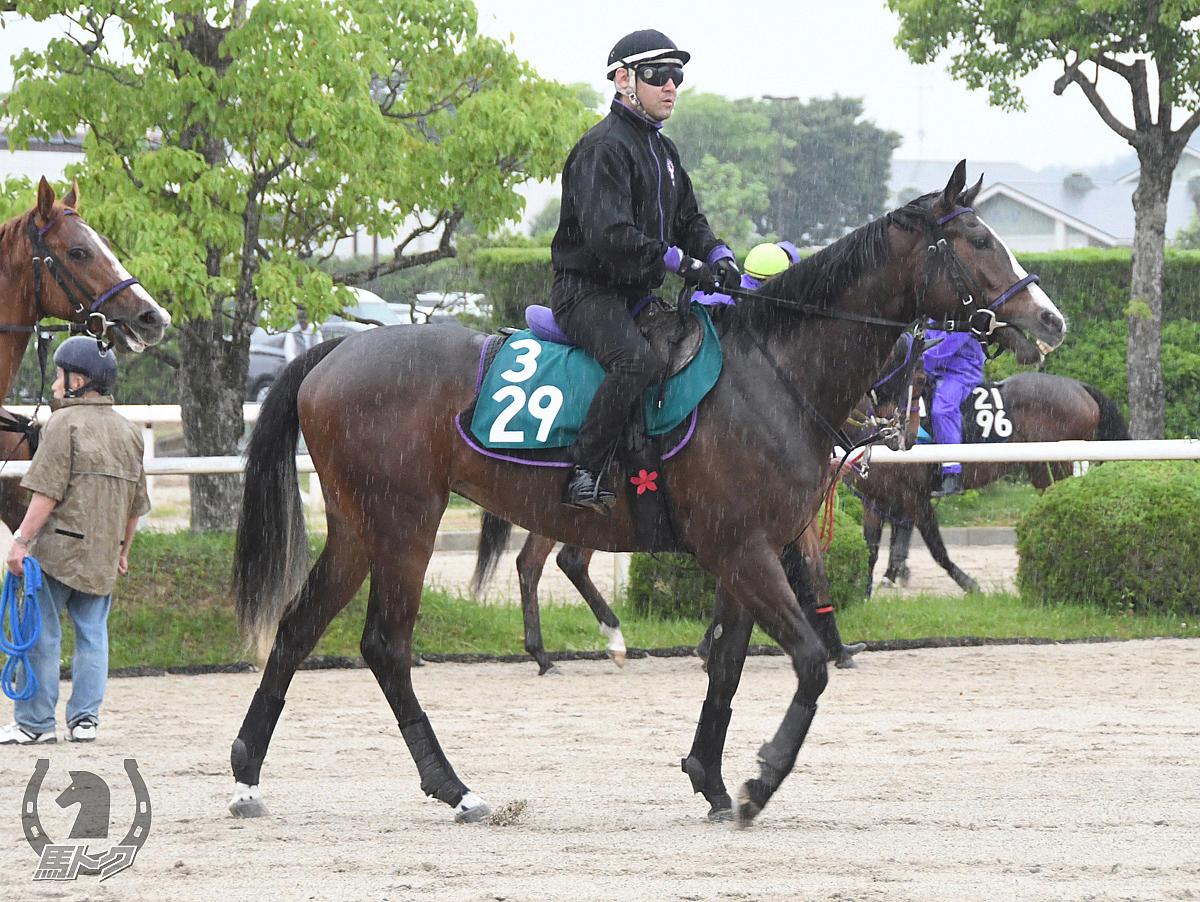 トロハの馬体写真