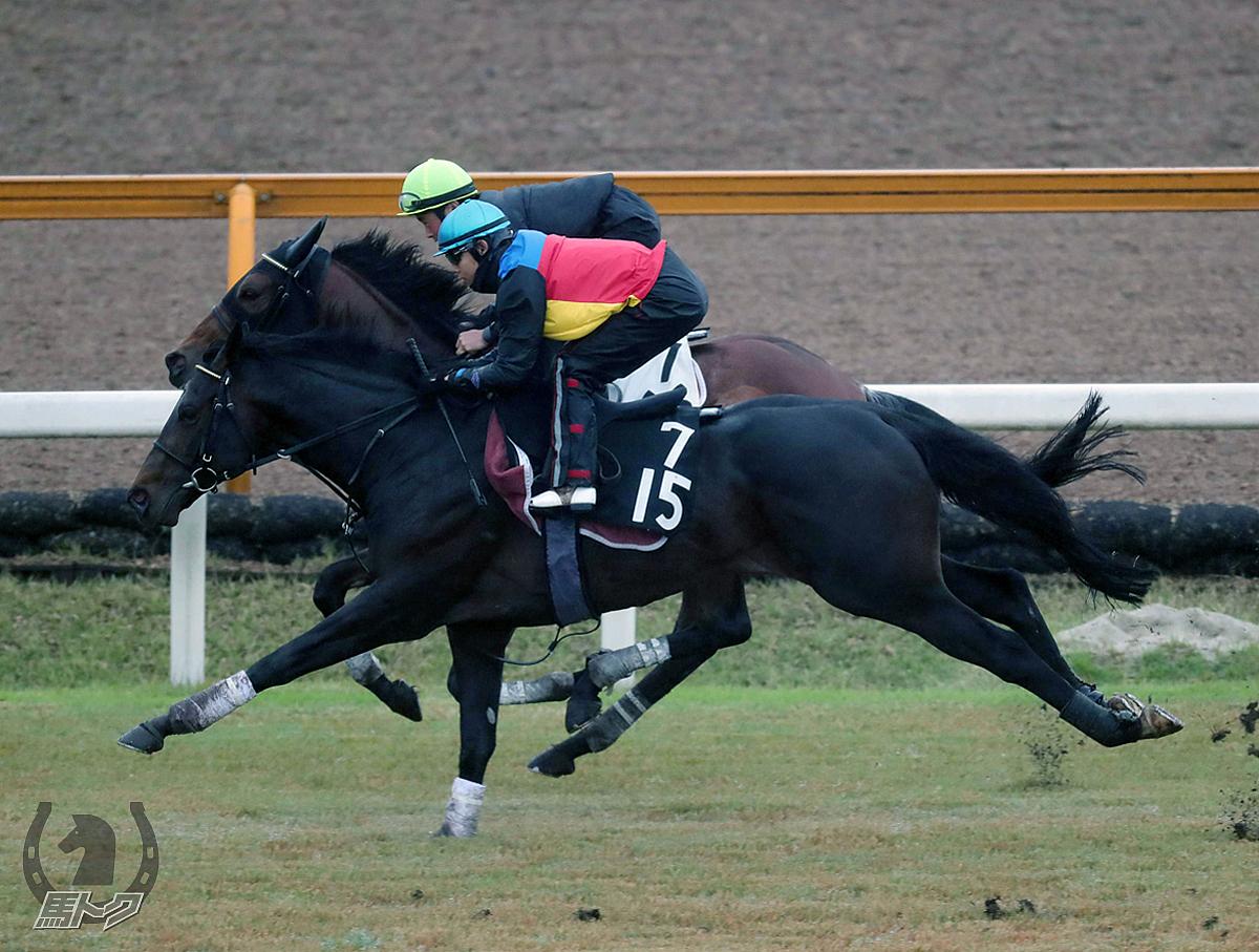 トーセンスカイの馬体写真