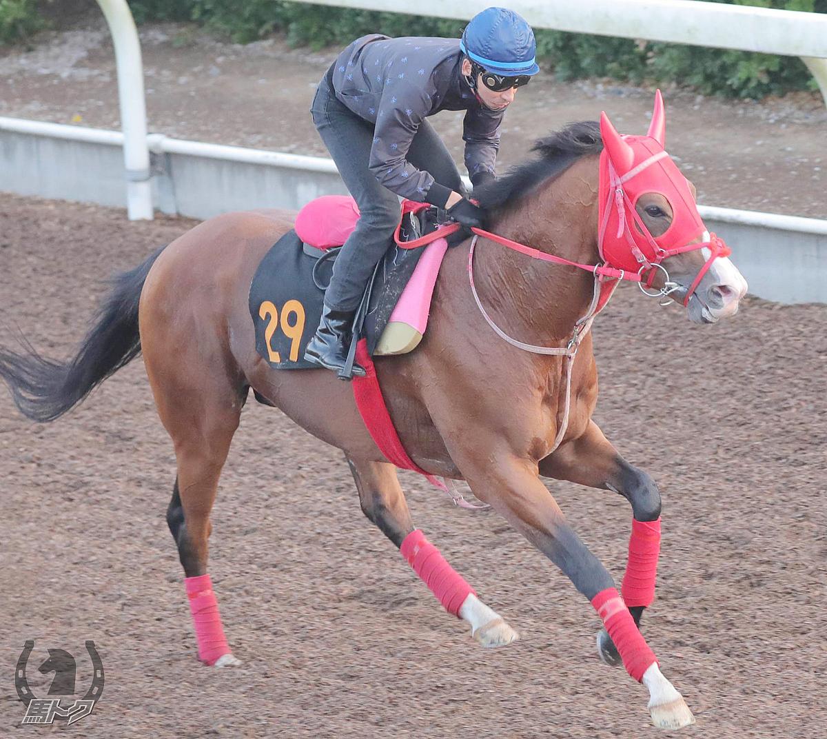 アドマイヤスコールの馬体写真