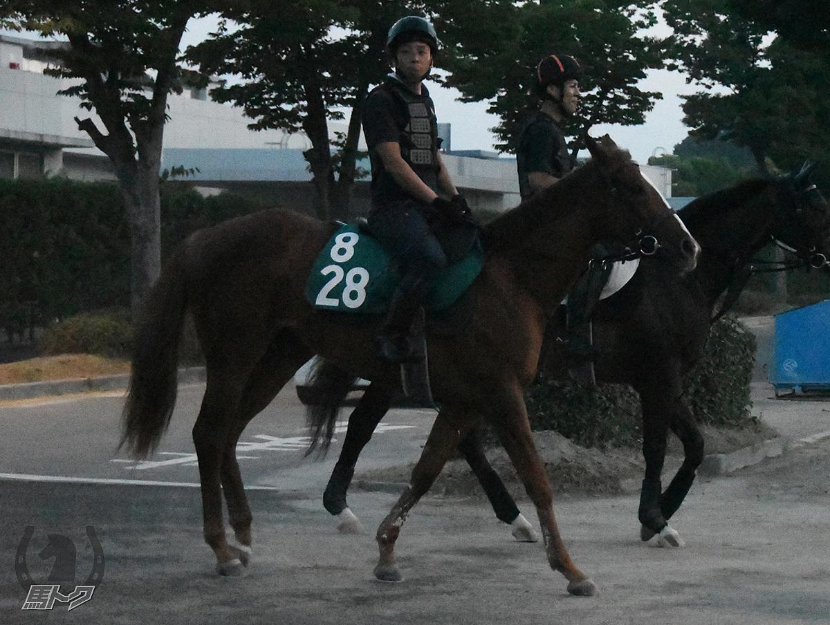 イニシエーターの馬体写真