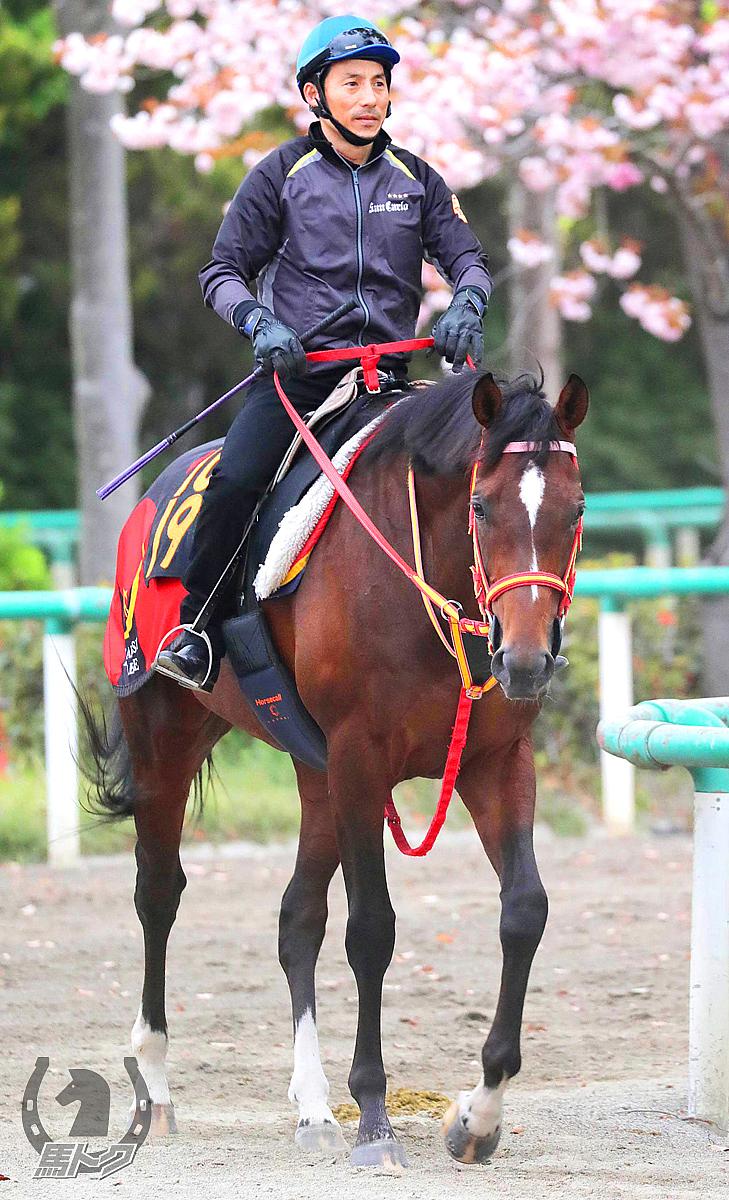 ピンシェルの馬体写真