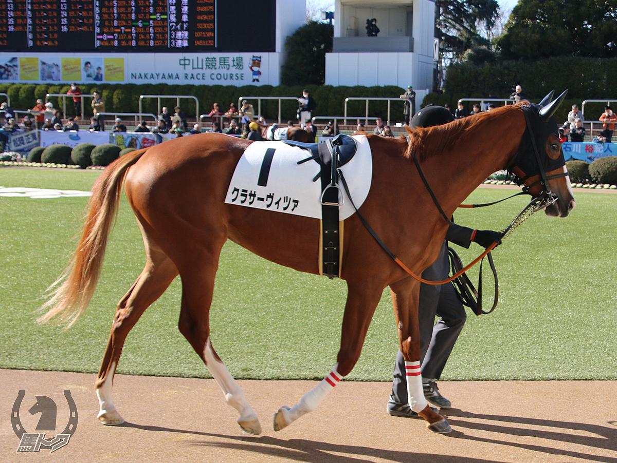 クラサーヴィツァの馬体写真