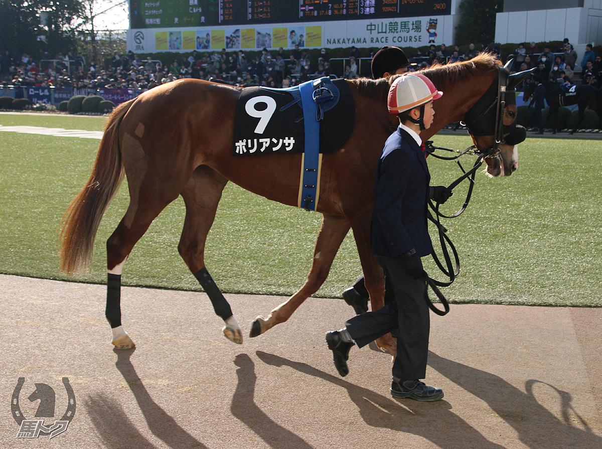 ポリアンサの馬体写真
