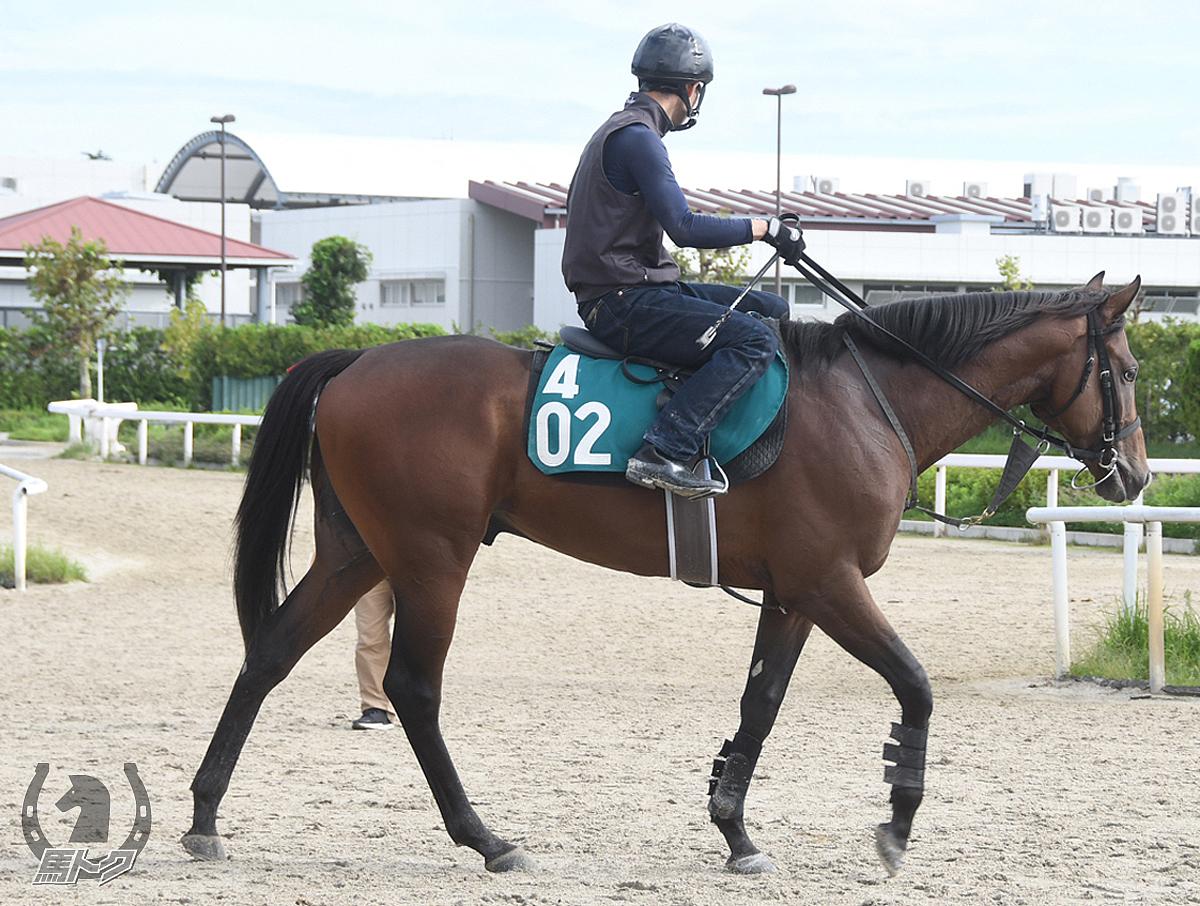 ブラックバッジの馬体写真