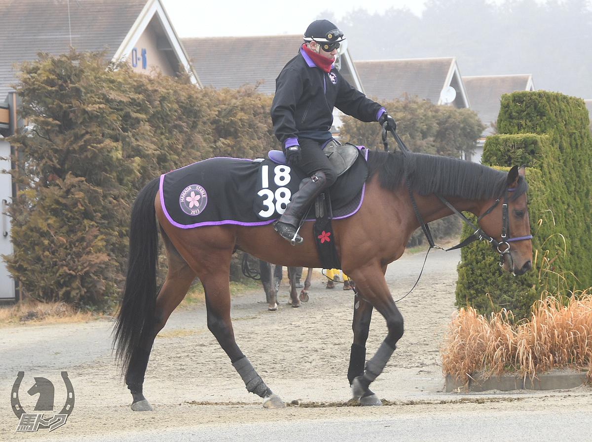 ウィッチクラフトの馬体写真