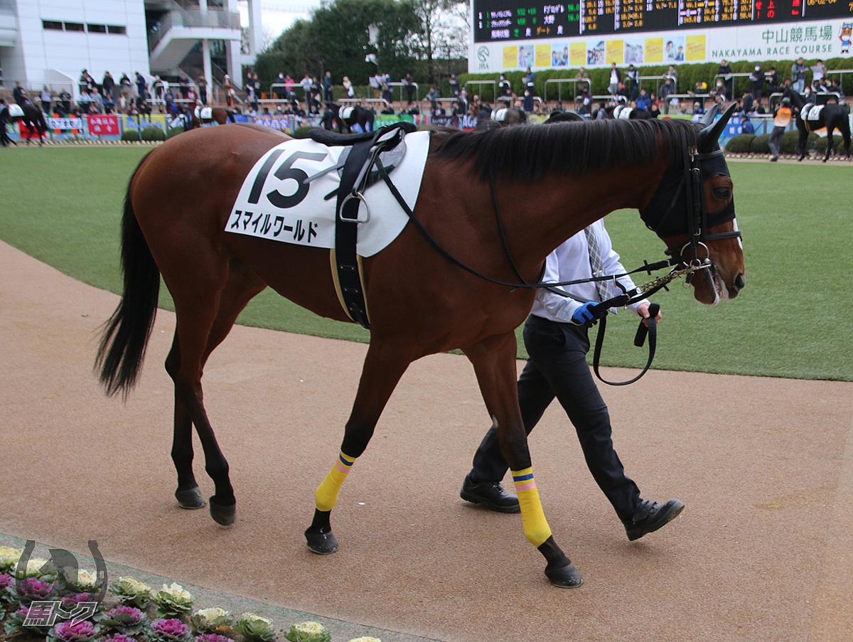 スマイルワールドの馬体写真