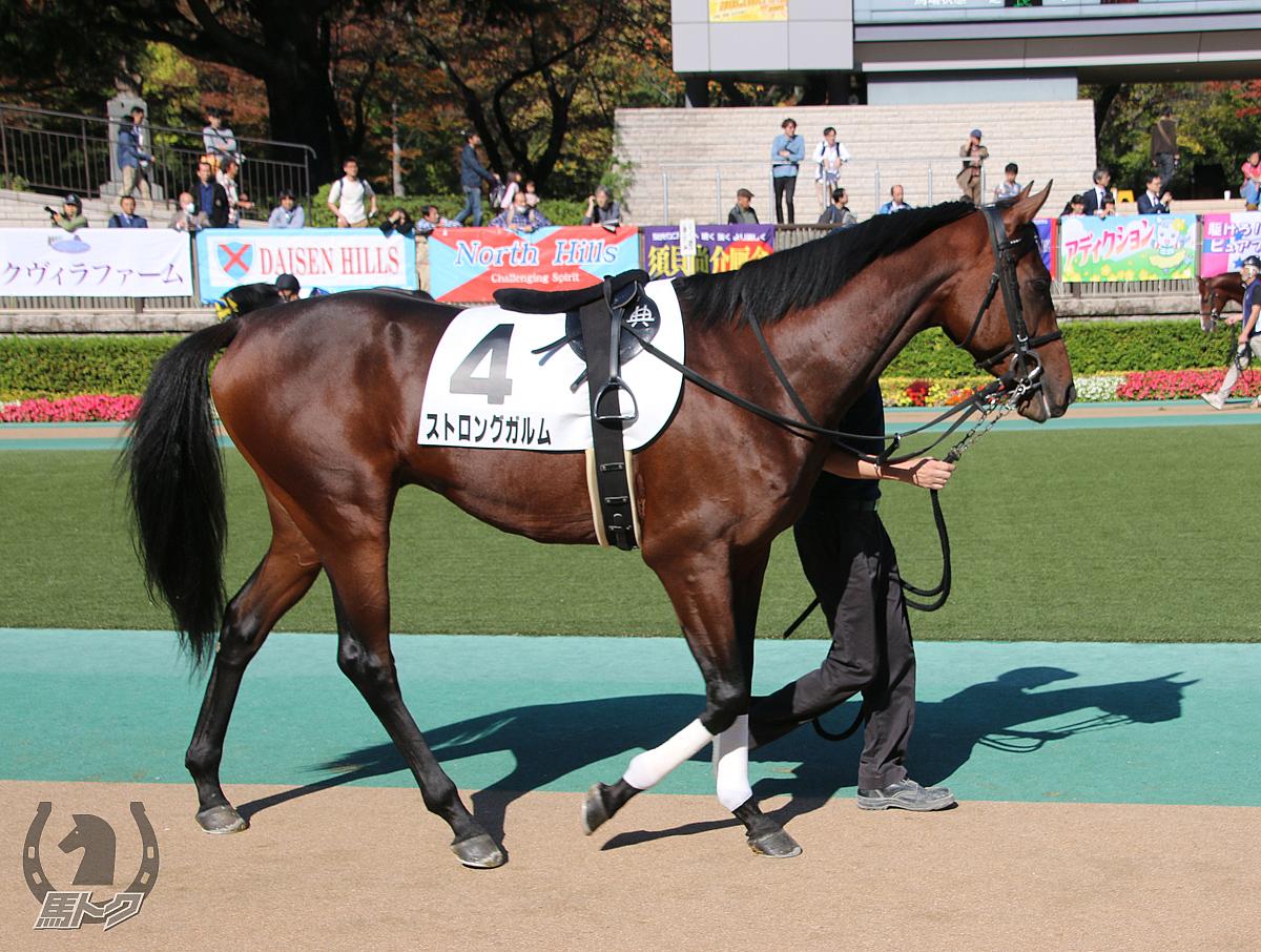 ストロングガルムの馬体写真