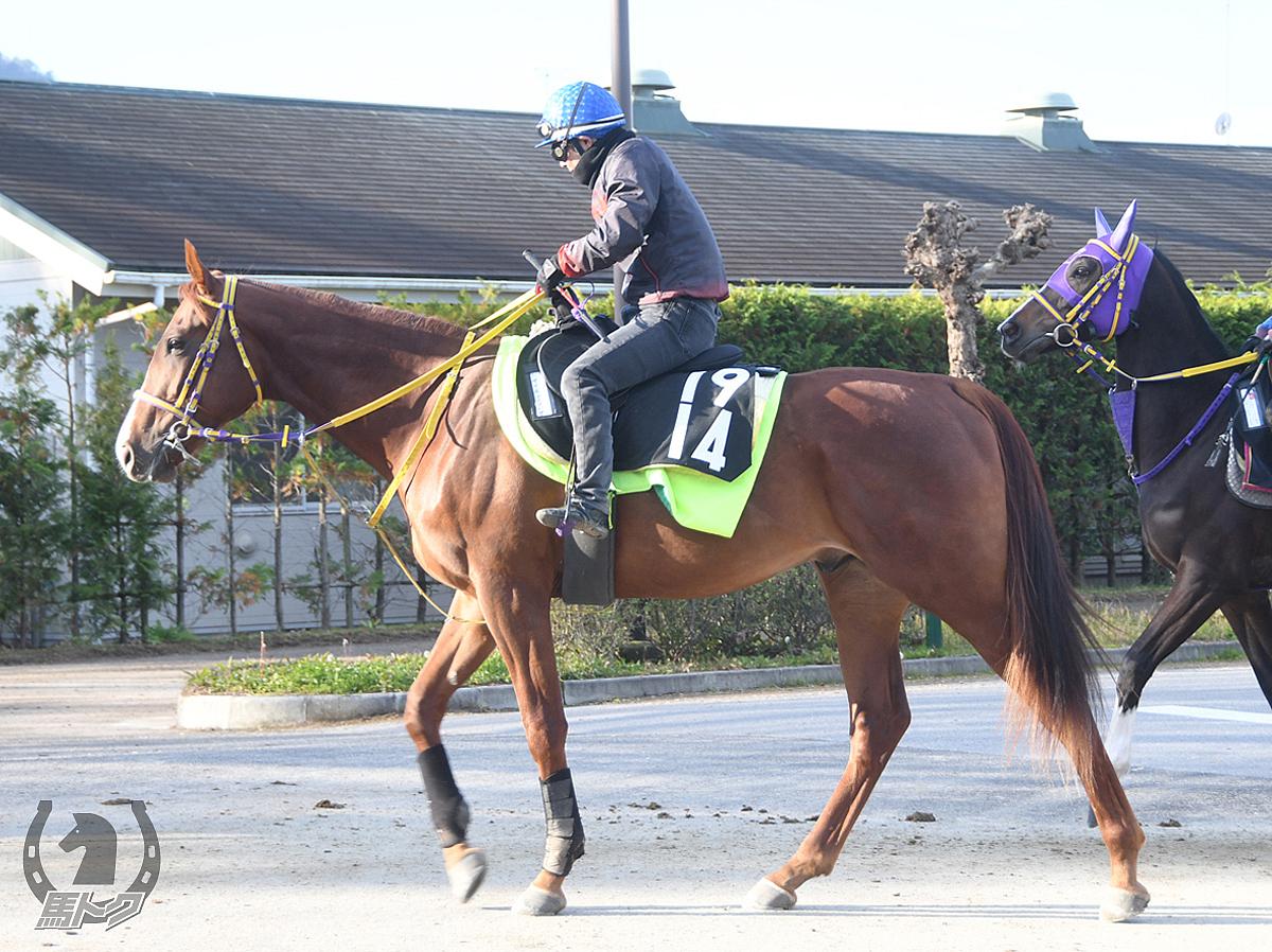 サイモンノツバサの馬体写真