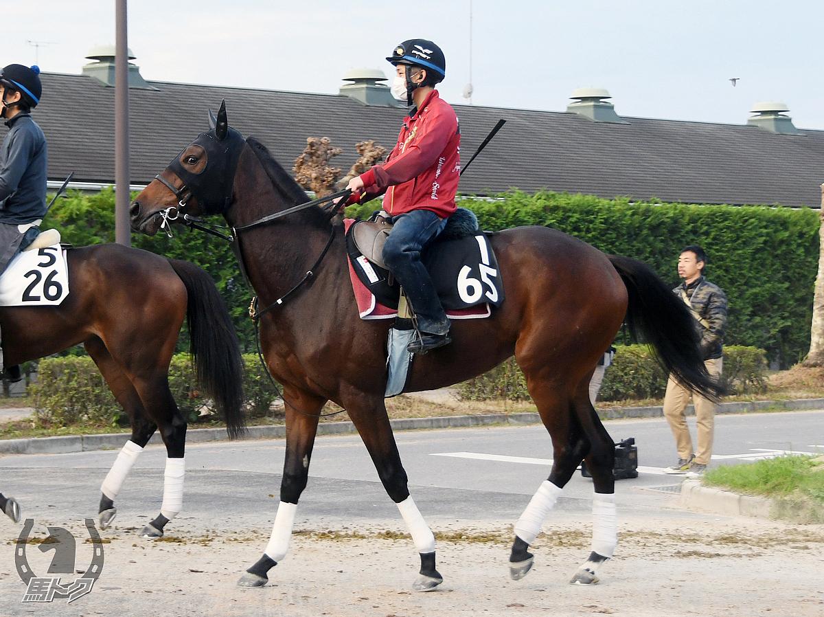 エスキシータの馬体写真