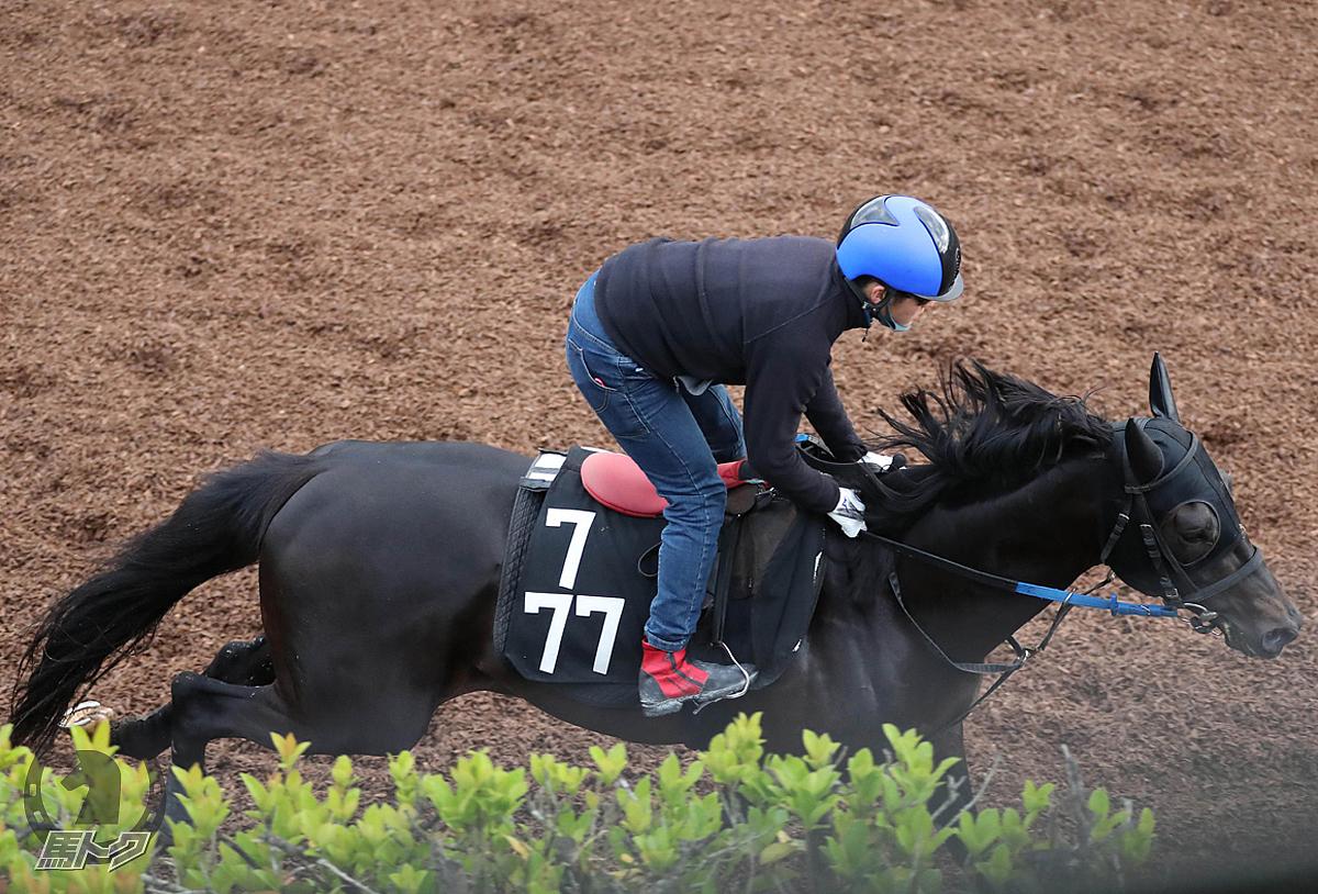 ハバナウインドの馬体写真