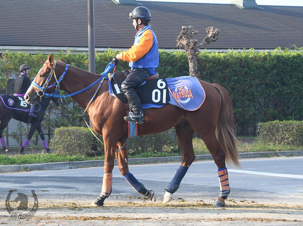 ダノンサザンの馬体写真