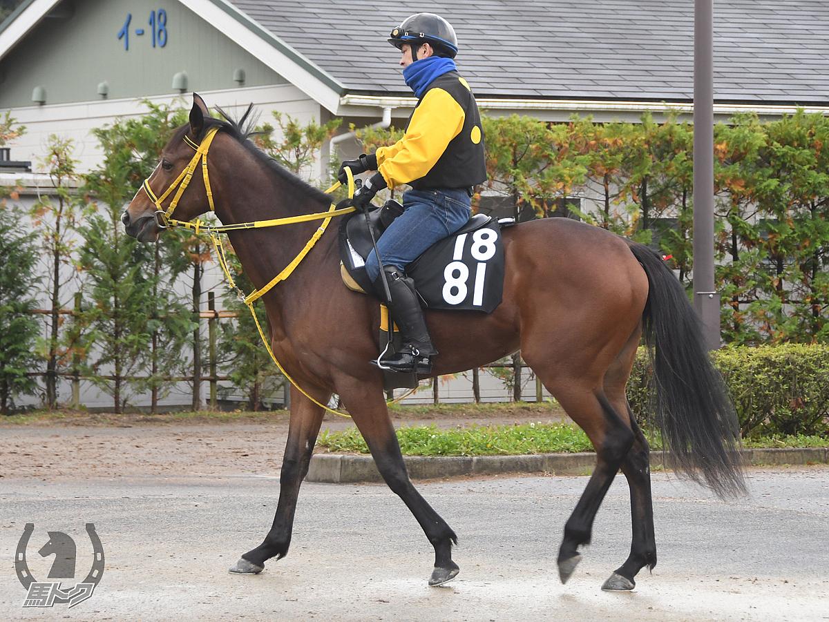 トラピッチェの馬体写真
