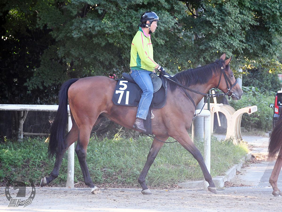 タイムハンドラーの馬体写真