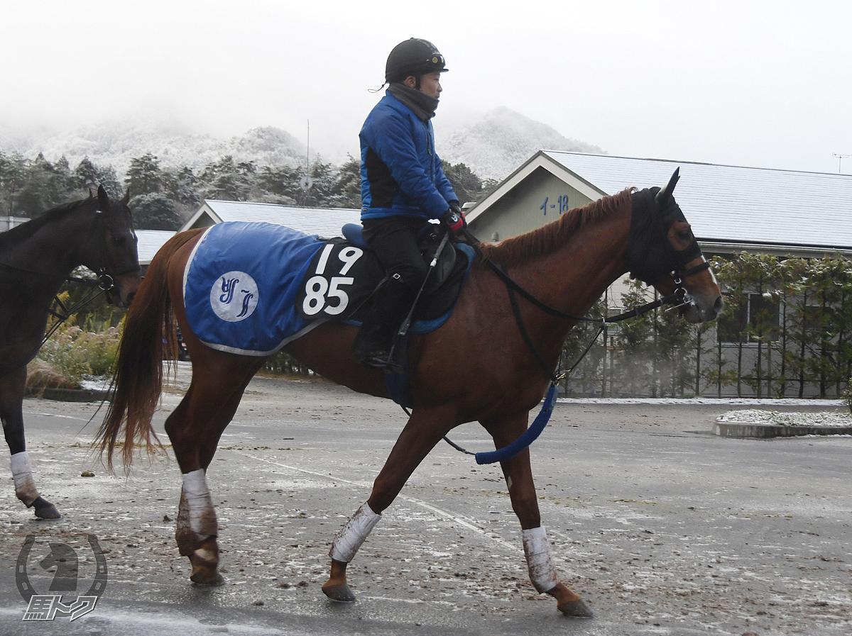 アテンポラルの馬体写真